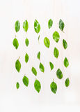 Flat lay of green leaves with water drops  on white wooden background, top view. Stock Photos
