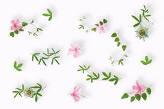 Flat lay of green passionflower plants and pink hibiscus flowers Stock Photography