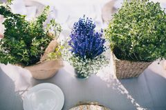 Flat lay with green plants and lavender plant in flowerpots on tabletop. With linen royalty free stock images