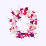 Flat lay greeting wreath of colorful fuchsia flower with place f Stock Photography