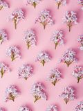 Lilac flower pattern. Flat lay lilac branch pattern ready used for flower arrangements and decoration Royalty Free Stock Image