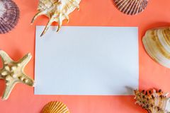 Flat lay living coral background with a place for text. Seashells. Background for design stock images
