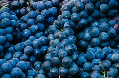 Flat lay, a lots of organic blue grapes stock images