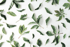 Flat lay pattern with green leaves and white flowers at white background Stock Image