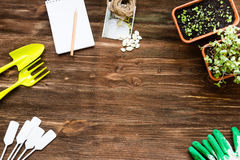 Flat lay scenery: floristic tools set. Gardening flat lay scenery: floristic tools set on wooden table above view with space for text. Pitchfork, scoops, plant Royalty Free Stock Photography