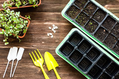 Flat lay scenery: floristic tools set. Gardening flat lay scenery: floristic tools set on wooden table above view with space for text. Seedling, pitchfork, plant Stock Photos