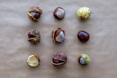Flat lay square geometric composition for autumn holidays Thanksgiving Day greeting cards with chestnuts on the kraft paper backgr. Ound. Top view royalty free stock photos