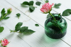 Flat lay still life with roses. Rose in vase on a white wooden background.flat lay Stock Images