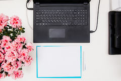 Flat lay, top view office table desk. laptop, pink Bougainvillea flowers in the pot, blue folder under note sheets on white backgr. Ound. home office working stock image