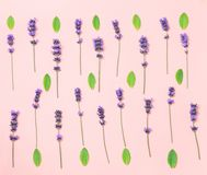 Summer lavender flowers and green leaves. Flat lay, top view and pink background stock photography