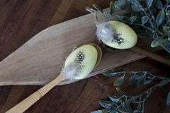 Yellow Easter eggs with feathers in wooden spoon royalty free stock photography