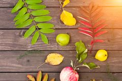 Flat lay view of autumn leaves royalty free stock image