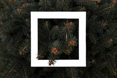 Flat layout of dark moody pine tree pattern with a white square frame creative design concept f. Flat layout of dark moody pine tree pattern with a white square stock photos