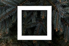 Flat layout of dark moody pine tree pattern with a white square frame creative design concept f royalty free stock photography