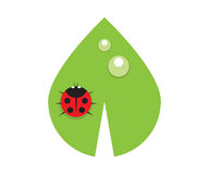Flat leaf with drops of dew and ladybird Royalty Free Stock Photo