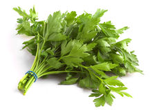 Flat Leaf Parsley Stock Images
