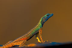 Flat Lizard Royalty Free Stock Photos