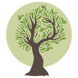 Flat olive tree. Vector Royalty Free Stock Photography