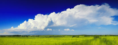 Flat open grassland and sky. Grassland and blue sky with white clouds Stock Images