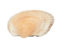 Flat orange shellfish Stock Photography
