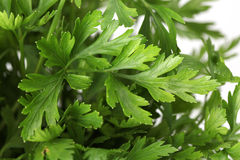 Flat parsley Royalty Free Stock Photos
