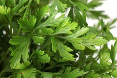 Flat parsley Royalty Free Stock Photos