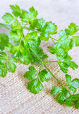 Flat Parsley Leaves Stock Images