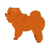 Flat pet chow. Chow and dog breed vector, puppy doggy character illustration Royalty Free Stock Photography