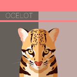 Flat postcard with Ocelot. Vector image of the Flat postcard with Ocelot Royalty Free Stock Photo
