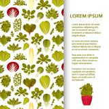 Flat poster or banner template with green salads and vegetables. Vector illustration Royalty Free Stock Photo