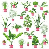 Flat Pot Plants Set Stock Image