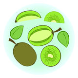 Flat  ripe green kiwi set. Fruit split in a half along and across, quarter, circle without rind sliced on half. Cute colorful summer fruit Stock Photo