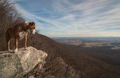 Flat Rock Stock Photography