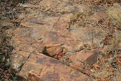 FLAT ROCK WITH DRY GRASS AND VEGETATION. View of surface of rock with cracks and fissures with dry grass and vegetation between Stock Photography