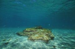 Flat rock of sandy sea bottom Royalty Free Stock Photo