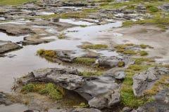 Flat rocks in Irish landscape. Flat, wet slate rocks and puddles in Irish landscape with grassy tufts stock images