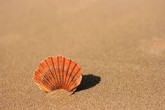 Flat sea shell on the sand. Flat sea shell standing on the flat beach sand. It projects its shadow on the back and has a short depth of focus Royalty Free Stock Photography