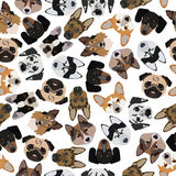 Flat seamless pattern pedigree dogs Royalty Free Stock Photos