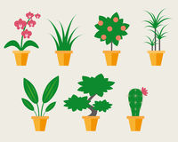 Flat style Houseplants. Vector illustration, may use like icons Royalty Free Stock Photo