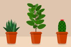 Flat style room plants in pots,  illustration. Cactus, aloe vera, ficus. Flat style room plants in pots,  illustration. Cactus, aloe vera, ficus Stock Photos