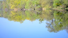 Flat surface of water reflected trees on the shore. Flat surface of the water reflected the trees on the shore, HD 1080 stock footage