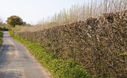 Flat top hedge stock photo