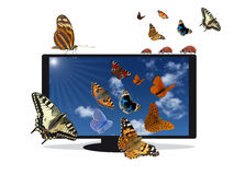 Flat TV with blue sky and insects. On a white background Royalty Free Stock Photo