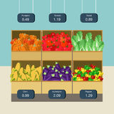 Flat vector agriculture vegetable market grocery showcase box Stock Image