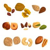 Flat vector icons of nuts and seeds. Hazelnut, pistachio, cashew, nutmeg, walnut, brazil nut, pecan, peanut and almond. Organic food. Vegetarian nutrition Royalty Free Stock Photography