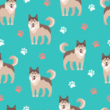 Flat vector illustration. Husky, nice friendly pet. Seamless   Royalty Free Stock Images