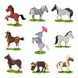 Flat vector set of different horses. Hoofed mammal animal. Wildlife and fauna theme. Elements for children book. Set of different horses. Hoofed mammal animal vector illustration
