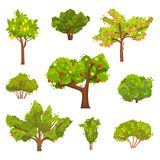 Flat vector set of fruit trees and berry bushes. Agricultural plants. Elements for book about gardening. Collection of different fruit trees and berry bushes vector illustration