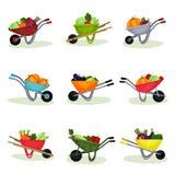 Flat vector set of garden wheelbarrows full of fresh vegetables. Natural and tasty food. Organic farm products. Collection of garden wheelbarrows full of fresh Royalty Free Stock Photos