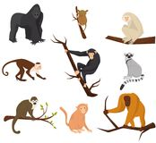 Flat vector set of 9 species of monkeys. Wild animals. Elements for promo poster or banner of zoo park. Wildlife theme. Set of 9 species of monkeys. Cartoon vector illustration